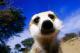 Pavatsiz_Mirket talkd avatar